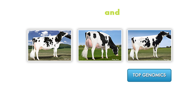 Top Genomics and Mating Sires - Find various genomic rankings and mating sire list to develop marketing strategies