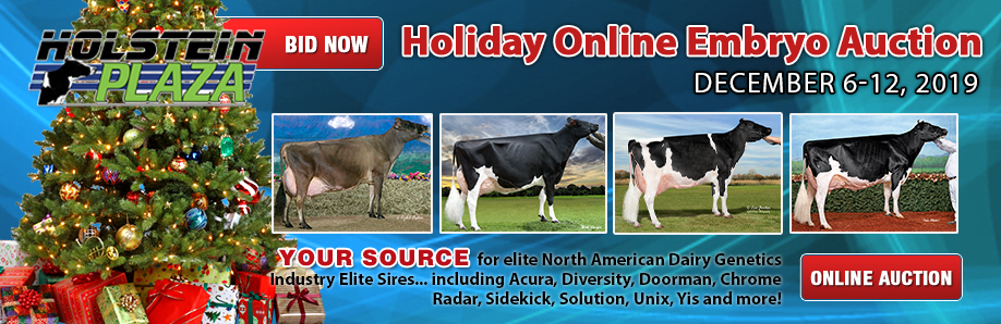 Holiday Online Embryo Auction