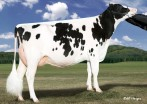 Larcrest Crimson EX-94 96-MS GMD DOM