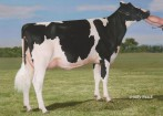 Debaugh Rdman Manhattan-ET EX-91