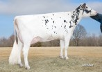 Morningview Stle Ashton-ET EX-91 DOM