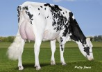 Mapel Wood Man O Man Brooke VG-88-1st Lac.