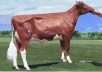 Oakfield Rea Holiday EX-90