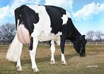 Morningview Super Roxy *RC VG-86-3YR-USA