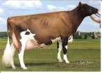 Ellbank Cherry Coke-Red-ET EX-92