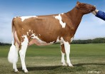 Fancypants Hopeful Rae-Red EX-90