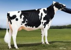 Lookout Pesce Epic Hue VG-86-2YR