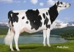 Rockymountain Super Leita VG-85-2YR-CAN