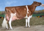 Willows-Edge Ad Melt-Red EX-93