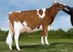 Palmyra Lad Many-Red GP-83-2YR
