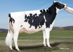 2nd Dam: Gold-N-Oaks Arabell 1765 VG-88 DOM