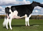 OCD Mogul Free Willy VG-87 DOM