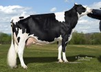 Pineland Sovereign Hallie EX-91 EX-MS