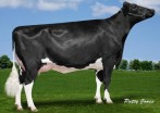 Aija Supersire Makea GP-83-2YR