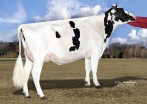 Dam: Wind-N-Tail Altiota Dory VG-86 VG-MS