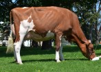 Stranshome All I Do-Red VG-86-2YR 86-MS