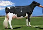 Ladies-First Obsv Bella VG-85