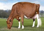 KHW Regiment Apple-Red-ET EX-96-USA DOM