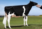 Hahncrest Atw Danica RC VG-89 MAX