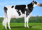 CLAYNOOK CLINIQUE OUTLAST VG-85