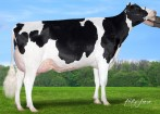 Claynook Frazzle Duke VG-86