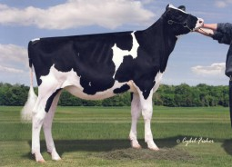 Siemers Domain Beautify-ET GTPI+2315 • #1 PTAT individual in the U.S. +4.92T