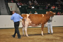 Grand Champion, Rockey-Benfer R Cutie-Red