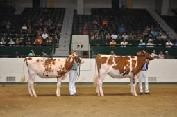 Junior Champions of the Minnesota State Fair R&W Show