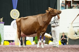 KHW Regiment Apple-Red EX-96-USA 3E DOM