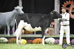 Crystal-Star Avlnch Cali, 2nd Place Fall Calf WDE 2019 (Photo by Cowsmopolitan)